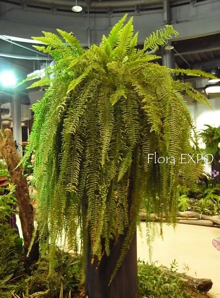 Flora-49.jpg