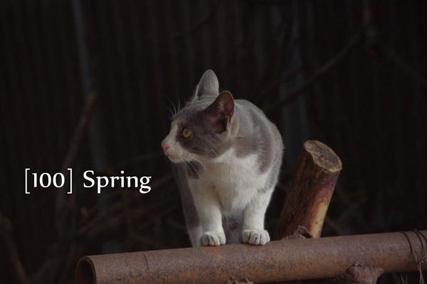 100 Spring-41.jpg