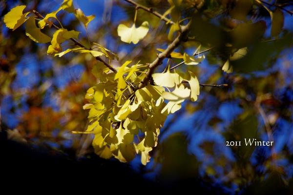 2011 Winter-45.jpg