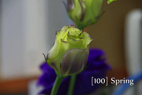 100 Spring-85.jpg