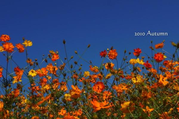 2010-Autumn-126.jpg