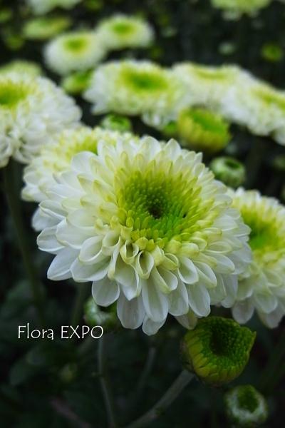 Flora-5.jpg