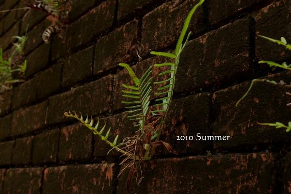 2010 summer-52.jpg