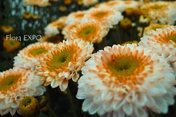Flora-10.jpg