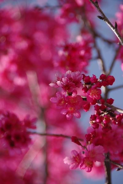 100 Spring-7.jpg