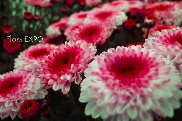 Flora-12.jpg