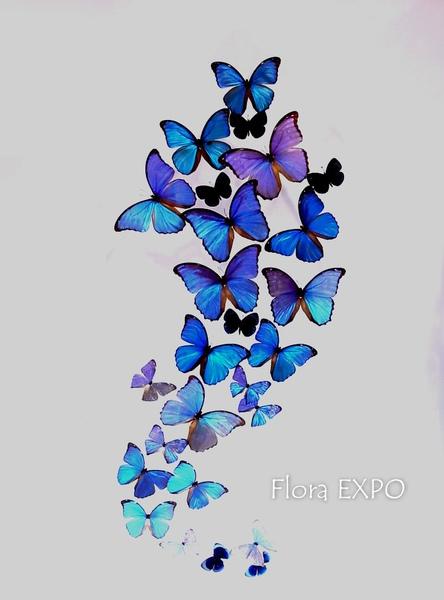 Flora-58.jpg