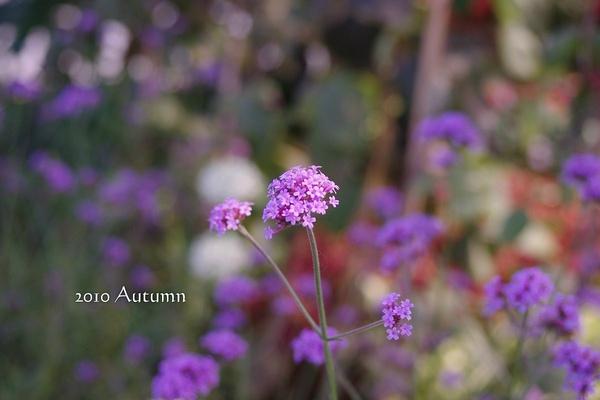 2010-Autumn-115.jpg