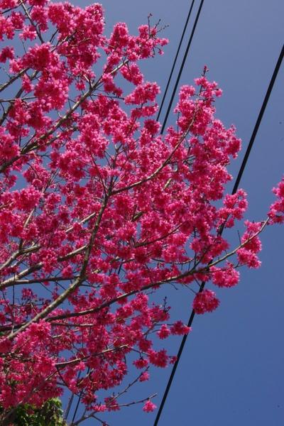 100 Spring-8.jpg