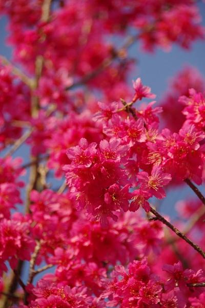 100 Spring-12.jpg