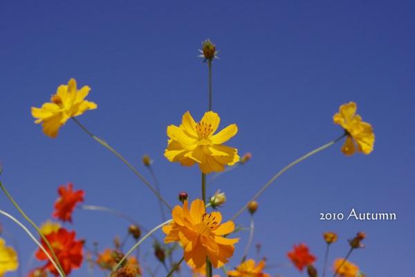 2010-Autumn-80.jpg