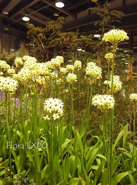 Flora-48.jpg