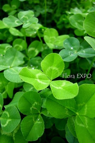 Flora-4.jpg