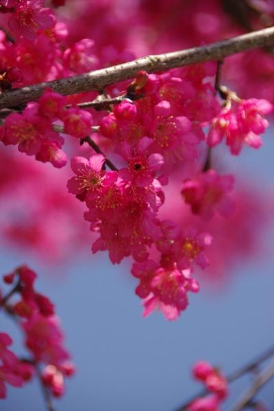 100 Spring-6.jpg