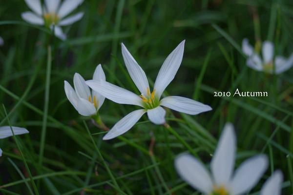 2010-Autumn-13.jpg