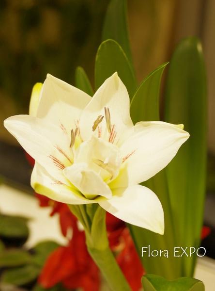 Flora-38.jpg