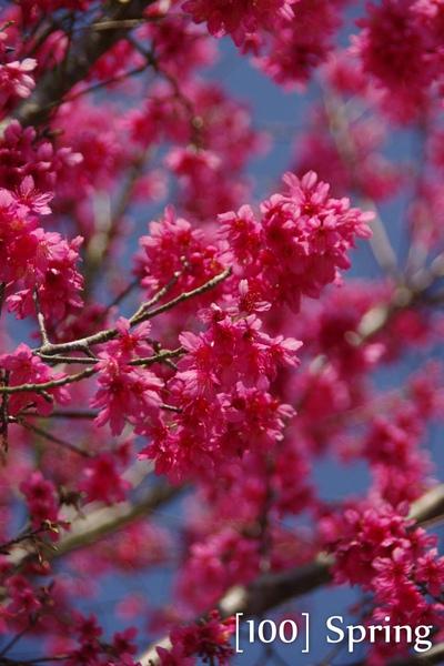 100 Spring-5.jpg