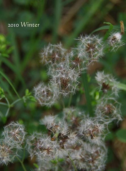 2010 winter-19.jpg