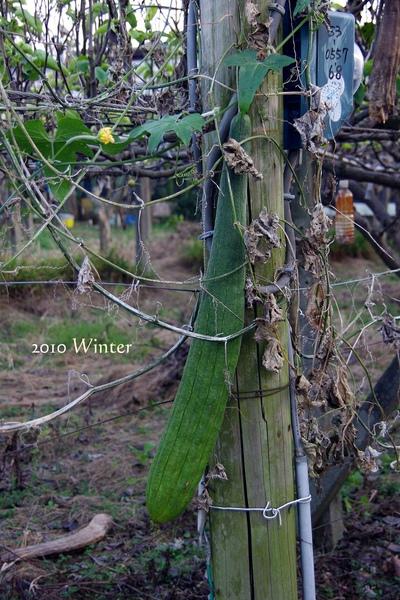 2010 winter-25.jpg