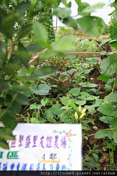 1001016-臺北市中山區聚盛里-友誼農場- (10).JPG