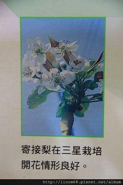 1001102-宜蘭縣三星鄉-青蔥文化館- (8).JPG