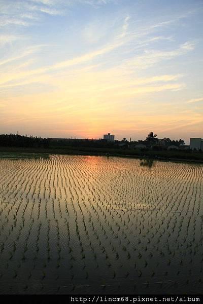 1010109-台南新市景緻- (8).JPG