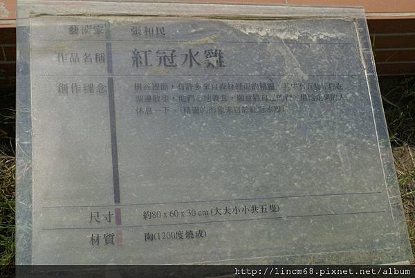 990414-張和民-紅冠水雞-南科樹谷科技園區 (1).JPG
