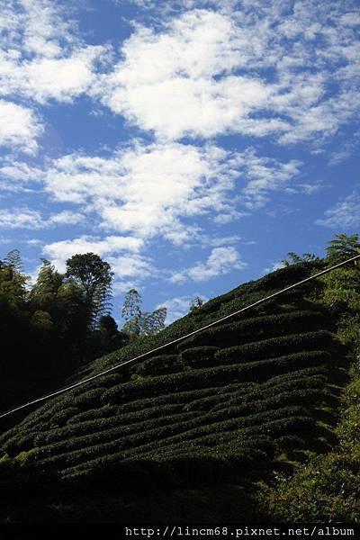 1010110-嘉義梅山-太平村聚落- 183.JPG