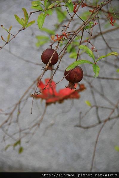 1010215-雲林縣-林內鄉-榴中社區- (12)