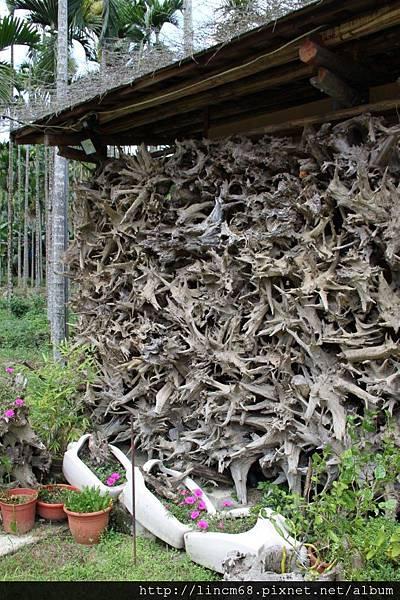 990812-南投魚池-大雁村-森林紅茶- 066