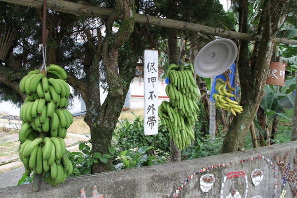 990812-南投魚池-大雁村-森林紅茶- 002.JPG