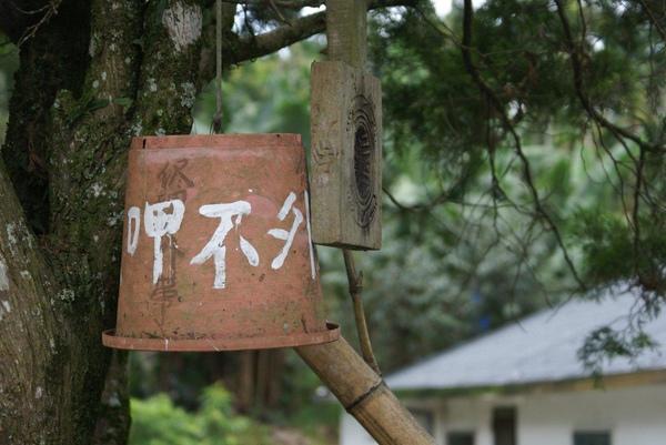 990812-南投魚池-大雁村-森林紅茶- (17).JPG