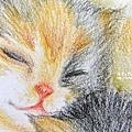 貓咪 ( (色鉛)3)