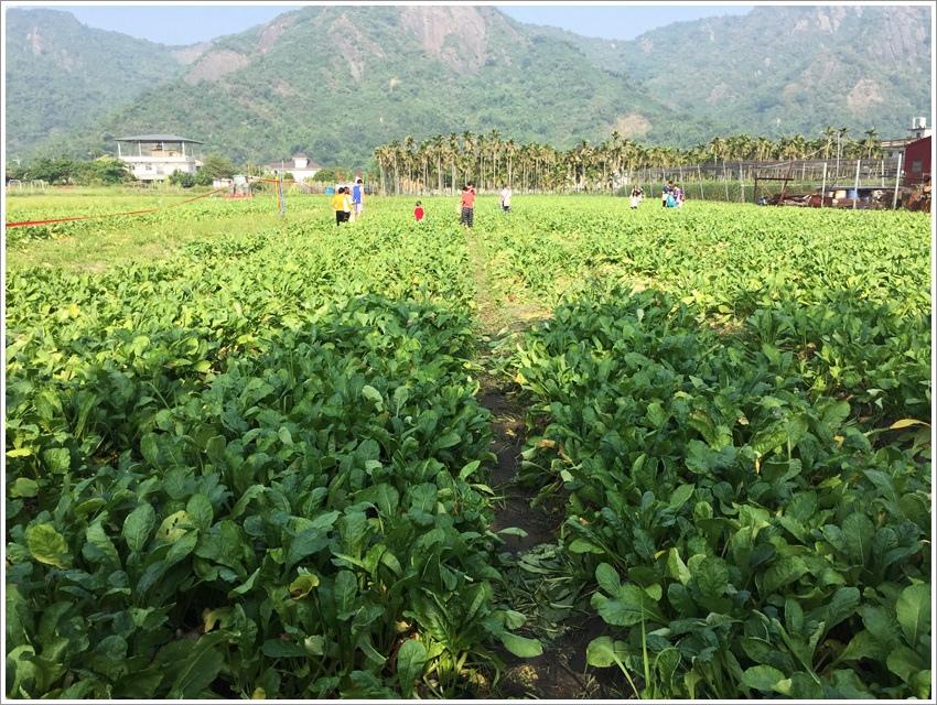 高雄親子旅遊-觀光工廠美濃、旗山- 體驗半日小農夫~ 白玉蘿蔔送給美濃人