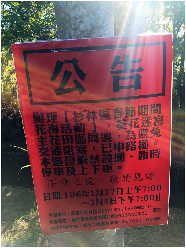 高雄旅遊-杉林區全台最大向日葵迷宮(初一)