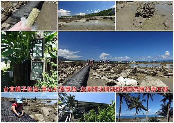 台東親子旅遊-富山杉原護魚-海藻饅頭珊瑚群潮間帶餵魚真有趣