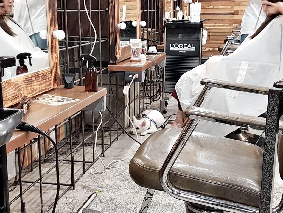 染髮推薦-GLITZ台中染髮推薦 髮型設計推薦 剪髮推薦