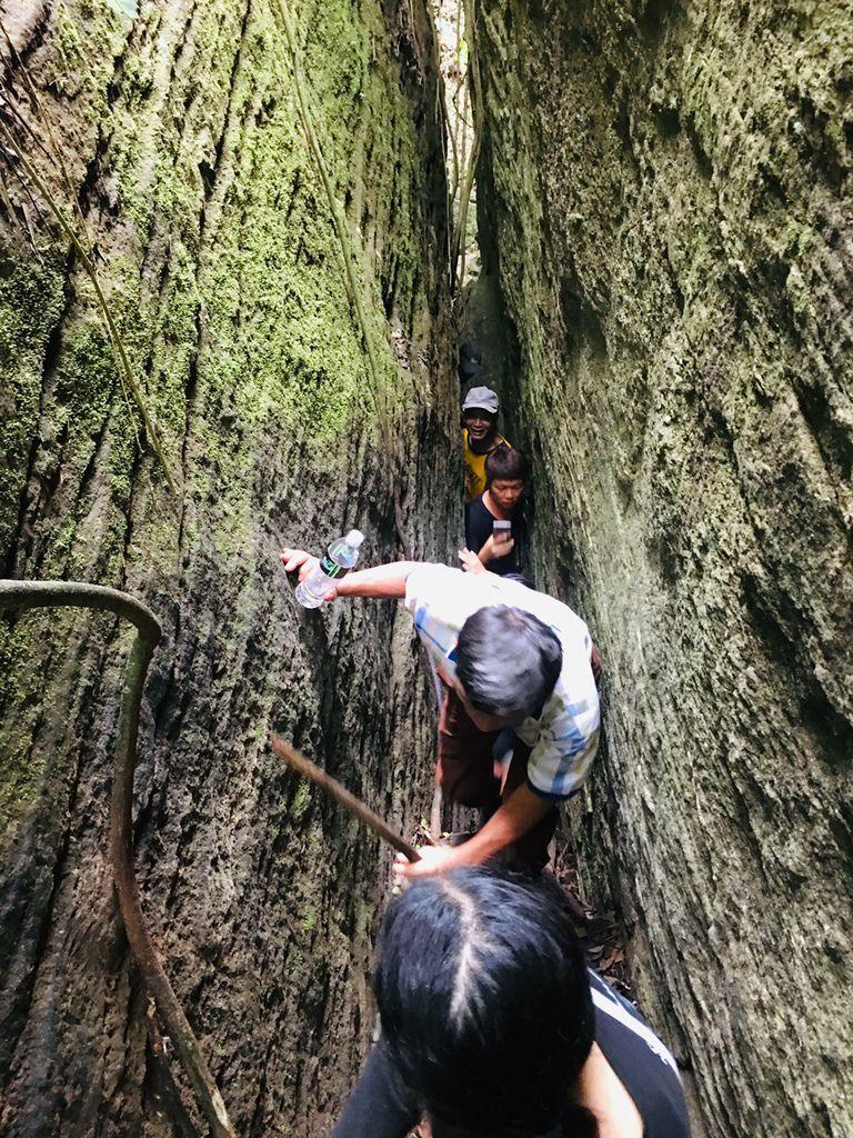 台東旅遊秘境-鸞山部落會走路的樹鸞山森林博物館大到讓人震撼的會移動的樹、自己烤竹叉山豬肉、極具挑戰的森林攀登、品嚐原住民風味餐和體驗大臼搗麻糬