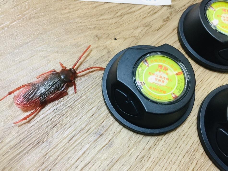 蟑螂炸藥速必效連鎖殺蟑螂套餐堡創三重誘蟑配方小強藥蟑螂誘餌保濕保鮮專利的蟑螂餌盒設計