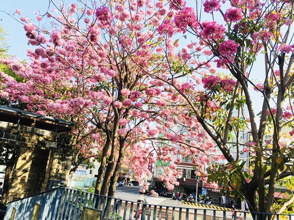 竹溪河畔洋紅風鈴木現在衝剛剛好漫步竹溪畔洋紅風鈴木粉療癒台南滿城花海超吸睛當季賞花攻略