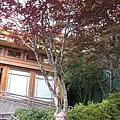 990805,06宜蘭太平山,龜山島,蘭陽博物館 009