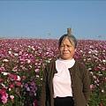 97.12.14-2008南投花卉嘉年華 008
