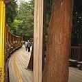 990805,06宜蘭太平山,龜山島,蘭陽博物館 036