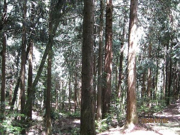 990702觀霧國家森林遊樂區 013