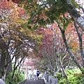 990805,06宜蘭太平山,龜山島,蘭陽博物館 010