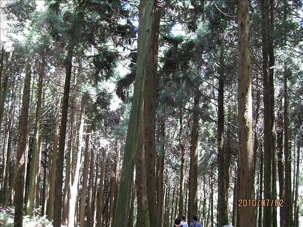 990702觀霧國家森林遊樂區 009