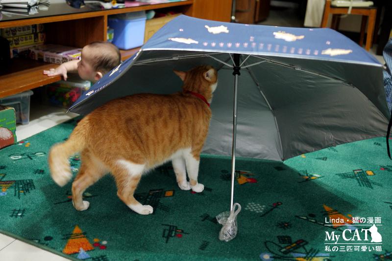 linda貓咪雨傘-13.jpg