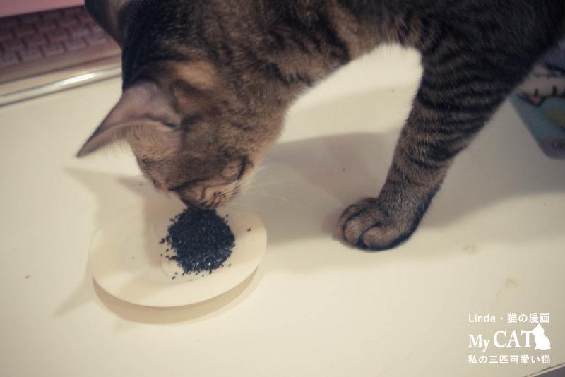 貓碳-7.jpg