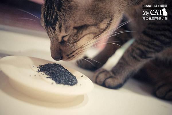 貓碳-8.jpg