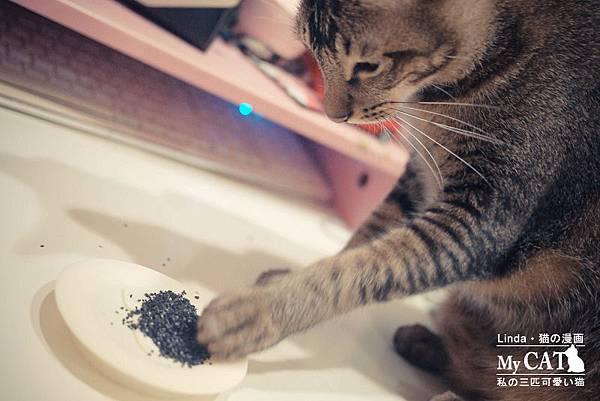 貓碳-9.jpg